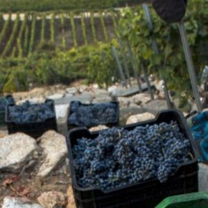 vinos de ribera sacra