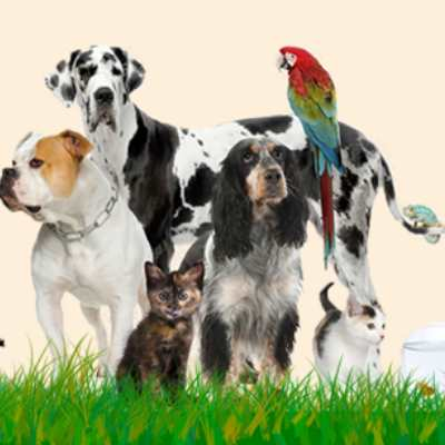 urgencias-veterinarias-madrid