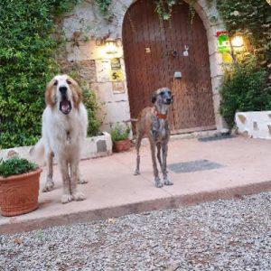 hotel-con-perros